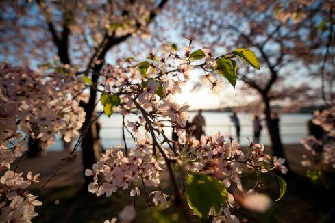 imagenes-jardines-japon