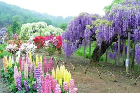 flores-imagenes